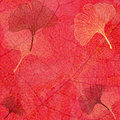 Abstract Background with Ginkgo Leaves in Red Royalty Free Stock Photo