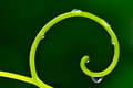 Abstract background with grapevine tendril Royalty Free Stock Photo