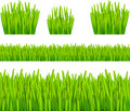 Abstract background with grass vector illustration Royalty Free Stock Photo