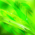 Abstract background green leaves and water drops.vector illustration Royalty Free Stock Photo