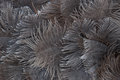 Abstract background of ostrich feathers Stock Photography