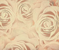 Abstract background with roses textured grunge Royalty Free Stock Photography