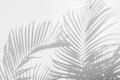Abstract background of shadow palm leaves on wall. Royalty Free Stock Photo