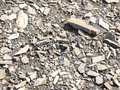 Shattered rock in a dry river bed Royalty Free Stock Photo
