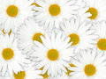 Abstract background of white flowers Royalty Free Stock Photo