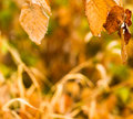 Abstract background with yellow autumn leaves on the natural bac Royalty Free Stock Photo