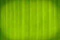 Abstract banana leaves in background Royalty Free Stock Photography