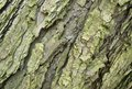 Abstract bark detail Stock Photography