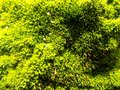 Abstract beautiful green moss background. Nature wallpaper backgrounds Royalty Free Stock Photo