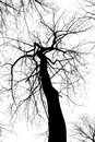 Abstract Black and White Creepy Tree Stock Image
