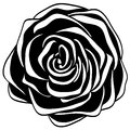 Abstract black and white rose. Stock Image