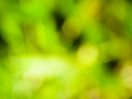Abstract blured green background. Natural texture