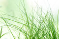 Abstract blured green grass background. Natural texture Royalty Free Stock Photo