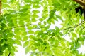 Abstract bokeh nature background and beautiful wallpaper.high quality Defocus of green leaf on tree. Royalty Free Stock Photo