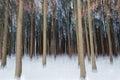 Abstract bos winter die met panning techniek de ontsproten Royalty-vrije Stock Foto