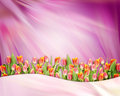 Abstract bright background with tulip flowers Royalty Free Stock Photo