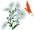 Abstract butterfly, and flower. Royalty Free Stock Photo