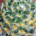 Abstract cactus Royalty Free Stock Photo
