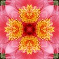 Abstract Camelia background Stock Photography