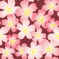 Abstract cherry-flowers background Royalty Free Stock Photo