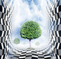 Abstract chess space with trees Royalty Free Stock Photo