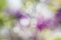 Abstract colorful and bokeh background, Spring garden. Royalty Free Stock Photo