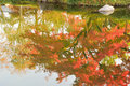Abstract colorful reflection of vibrant Japanese autumn maple leaves on pond waters Royalty Free Stock Photo