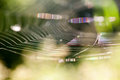 Abstract composition with spider web details Royalty Free Stock Photo