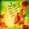 Abstract cute autumnal background  Royalty Free Stock Photo
