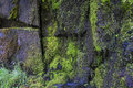 Abstract design of rocks with moss wet dark green Stock Photo