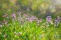 Abstract dreamy beautiful sunny meadow with flowers background Royalty Free Stock Photo