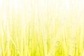 Abstract Drops of dew on the beautiful green grass background Royalty Free Stock Photo