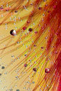 Abstract drops and feather Royalty Free Stock Photography