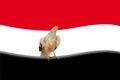 Abstract egyptian flag Royalty Free Stock Photo