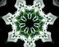 Abstract extruded mandala 3D illustration 7 sided star
