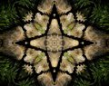 Abstract extruded mandala 4 sided star