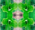 Abstract extruded plant mirror 3D illustration