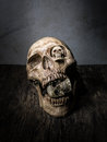 Abstract face of skull. Royalty Free Stock Photo