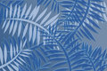 Abstract fern pattern plant in shades of blue Royalty Free Stock Photos