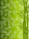 Abstract floral background with a bamboo Stock Photography