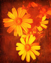 Abstract floral grunge background Royalty Free Stock Photo
