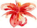 Abstract floral watercolor paintings Stock Photos