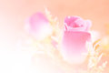Abstract flower background. flowers made with color filters Royalty Free Stock Photo
