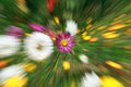 Abstract flower background zoom effect nature Royalty Free Stock Photo