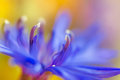 Abstract flower closeup with soft focus background Royalty Free Stock Photos