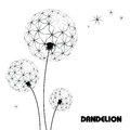Abstract flower dandelion decorative beautiful Stock Images