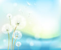 Abstract flower dandelion decorative summer Royalty Free Stock Photography