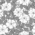 Abstract flowers seamless pattern background black isolated Royalty Free Stock Images