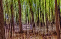 Abstract forest background Stock Afbeeldingen