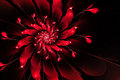 Abstract fractal flower,red on a black background Royalty Free Stock Photo